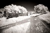 Trail - Infrared